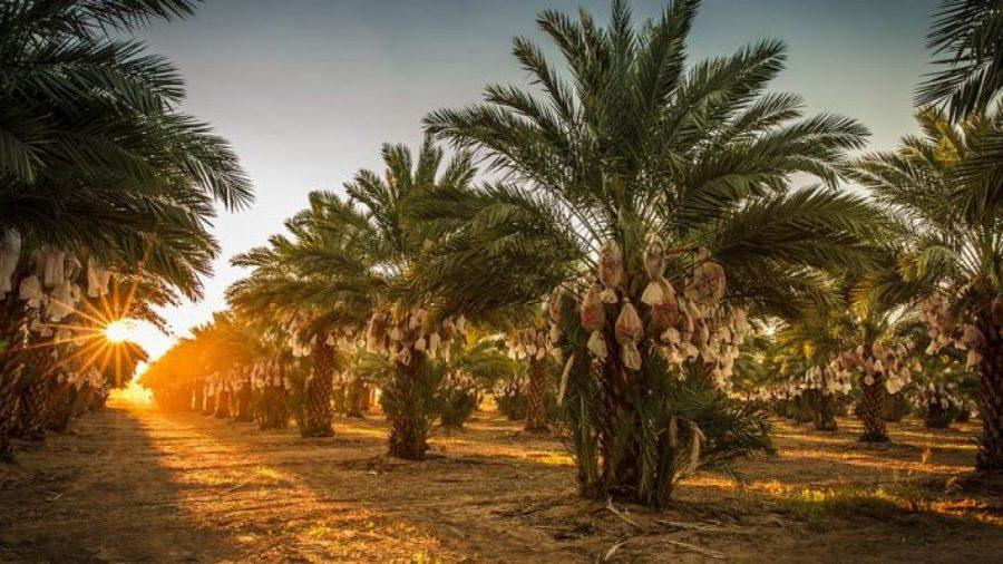 Menginfakan Harta Terbaik, Kisah Inspiratif Abu Dahda