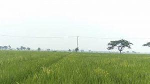 Wakaf Lahan Pertanian, Wakaf Produktif yang Solutif