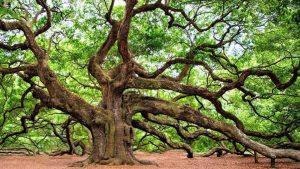 Hari Pohon 2020