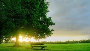 Read more about the article Menjadi Sebatang Pohon yang Kokoh